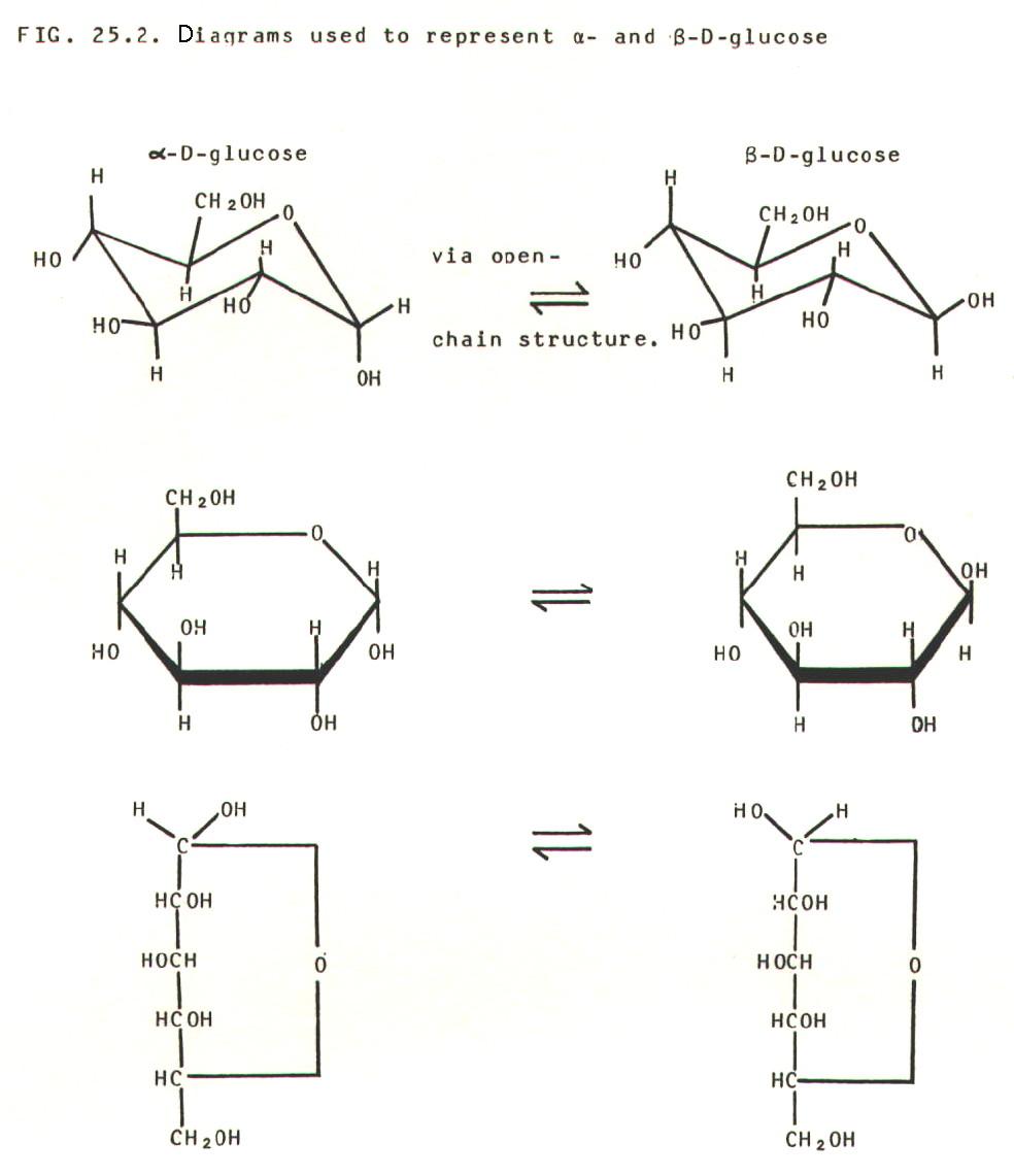 monosaccharides  glucose  L Glucose